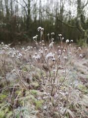 gefrorener Boden in Schleswig-Holstein