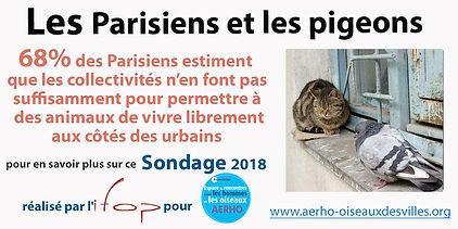 com_Sondage_animaux_libres_collectivité.