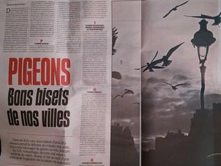 Des pigeons dans la ville : une double page dans LIBÉRATION