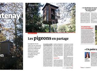 Les pigeons à l'honneur dans le journal municipal de Fontenay-sous-Bois