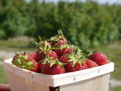 panier_fraises2