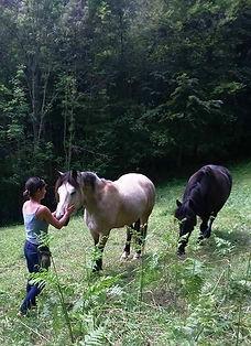 Cavaliers des Revoux, Ferme équestre dans le Vercors, Randonnée à cheval dans le Vercors, Balade à cheval dans le Vercors, Drôme, pensions de chevaux, plateaux du Vercors, Tourisme équestre dans le Parc Naturel du Vercors