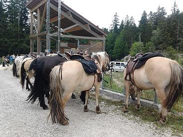Cavaliers des Revoux, Vercors, Equitation, Randonnée, Balade, Cheval, Drôme, pensions de chevaux, plateaux du Vercors,Equitation, Tourisme équestre