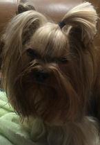Handmade Pet Hair Bows