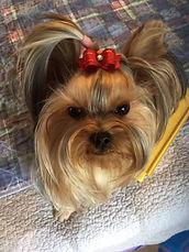 Cute Dog Grooming Bows