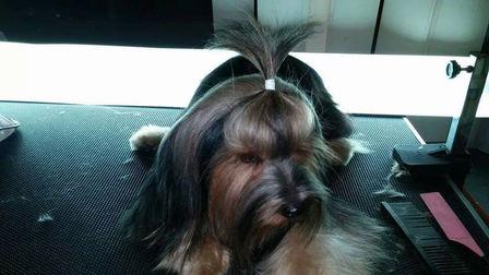 Elastic Hair Wraps