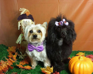 Cute Dogs Grooming Bows