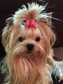 Dogs Hair  Wraps