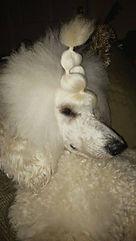 Dog Hair Bows