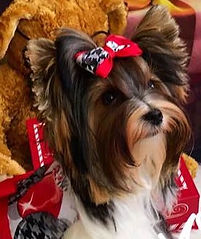 Hair Wraps For Dogs