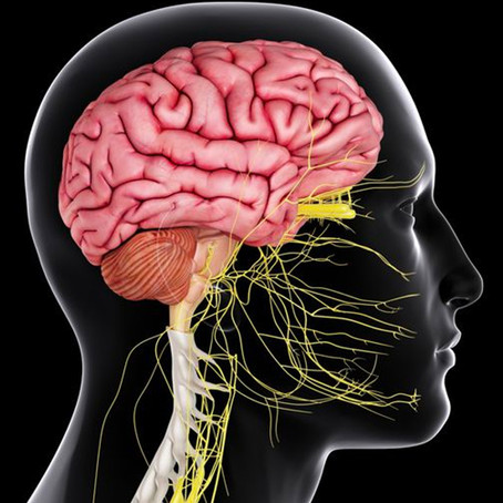 The Brain is an Organ