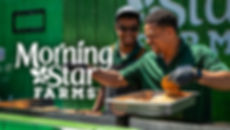 Thumbnail - Morning Star.jpg
