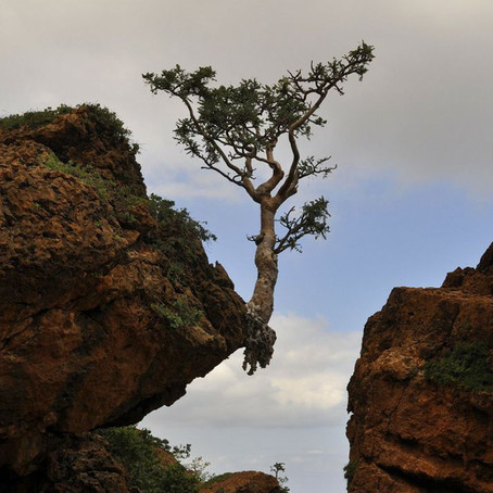 Resilience – A Key to Fulfilment
