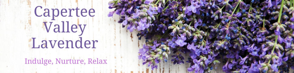 Capertee Valley Lavender (1).jpg