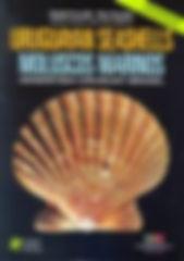 Uruguaian Sea Shells.jpg