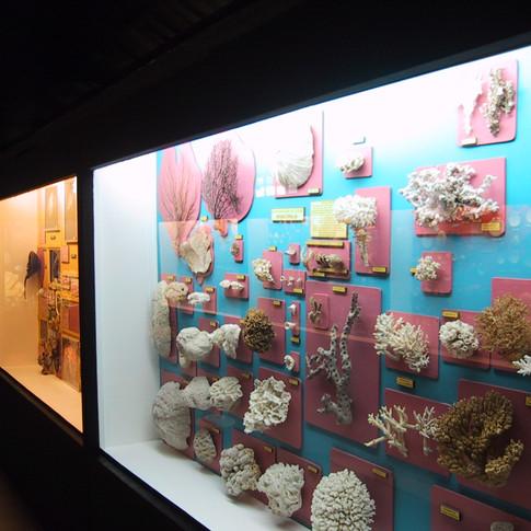 Museu do CENEMAR