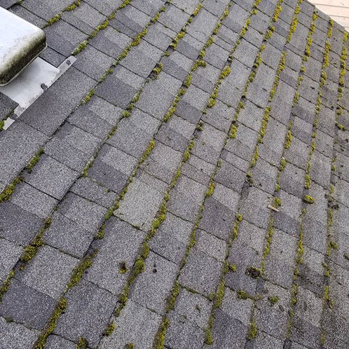Roof Cleaning Amp De Mossing Flash Deal