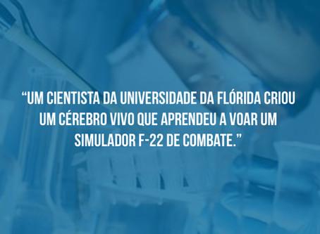 Cientista Maluco da Universidade da Florida