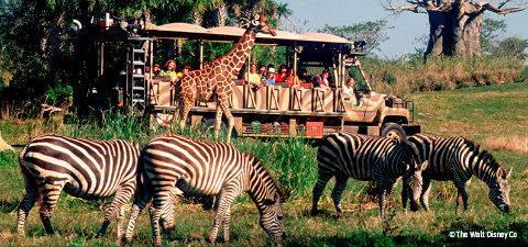 Safari Animal Kingdom GO USA