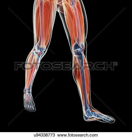 Fisiologia e jogador de futebol