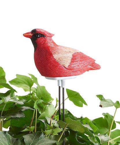 Songbird Moisture Meter