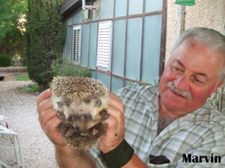 Marvin with a Hedgehog