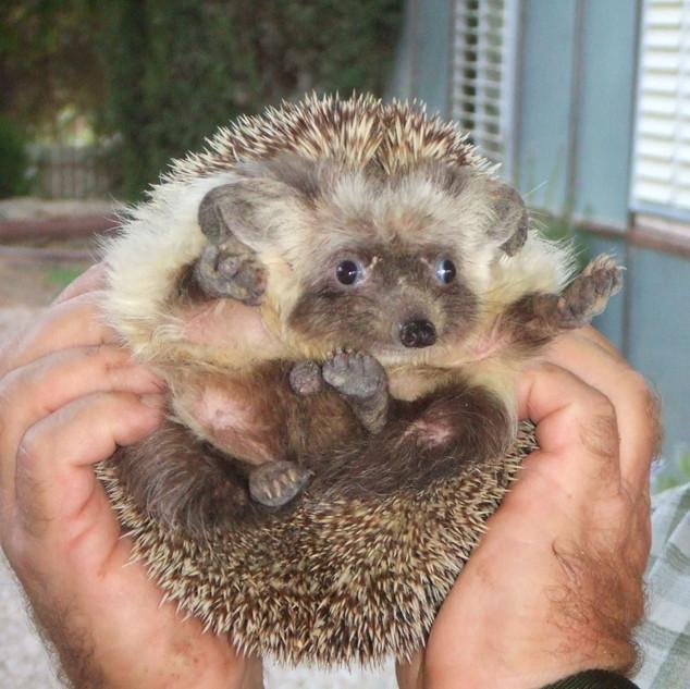 Marvin holding hedgehog