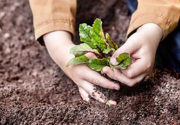 Auginame daržoves.