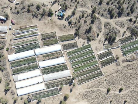 Major Illegal Marijuana Grow Dismantled By Central Oregon Drug Agents