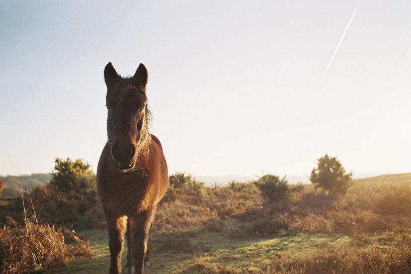 The Horse Reiki