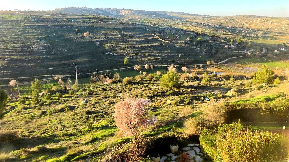 Illustration: Spring In Gush Etzion (Image Credit: Dr. Barry Lynn © 2020)