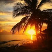palmtrees jamaica montego bay bazil