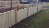 Paling Fence With Exposed Posts & Capping.