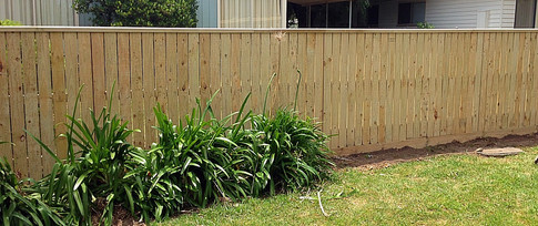 Paling Fence With 10mm Gap & Capping
