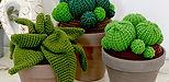 Collection de cactus taille XL et XLL de la maison bonjour