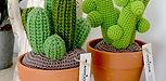 Collection de cactus taille L de la maison bonjour