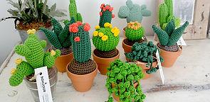 Collection de cactus taille S de la maison bonjour
