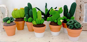 Collection de cactus taille M de la maison bonjour