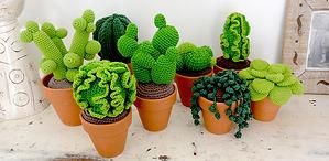 Collection de cactus taille M+ de la maison bonjour
