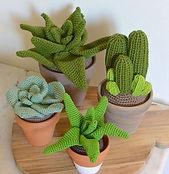 Cactus au crochet maison bonjour