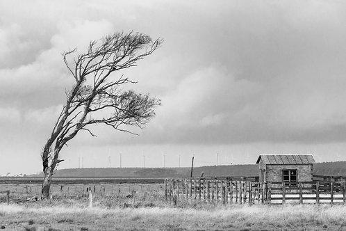 Rafael M. Sgari - 01 (A casa e a árvore)