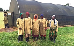 Mtanga NML Seed Greenhouse Tanzania