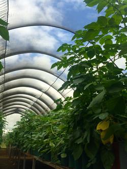Tanzania Mtanga Seed Greenhouse NML