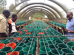 NML Mtanga SAGCOT Tanzania Seed