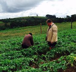 Mtanga Tanzania NML Seed
