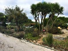 Yuccas garden