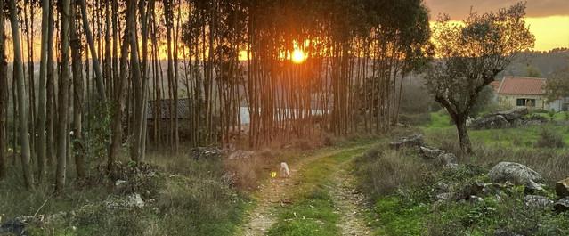 Sunset Casas do Carvalho