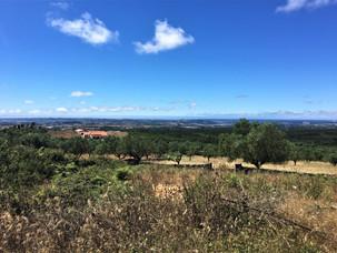Vista campo Casas do Carvalho