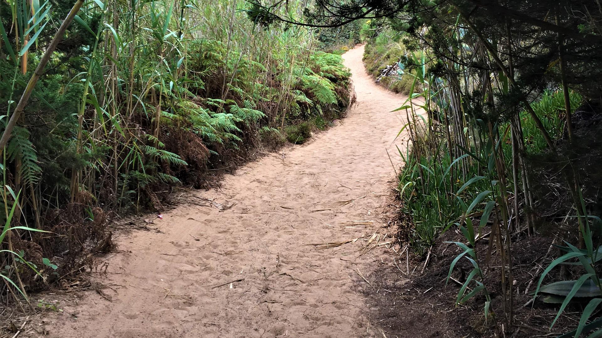 Casas do Carvalho Trails