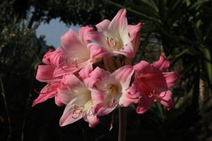 Flores Casas do Carvalho